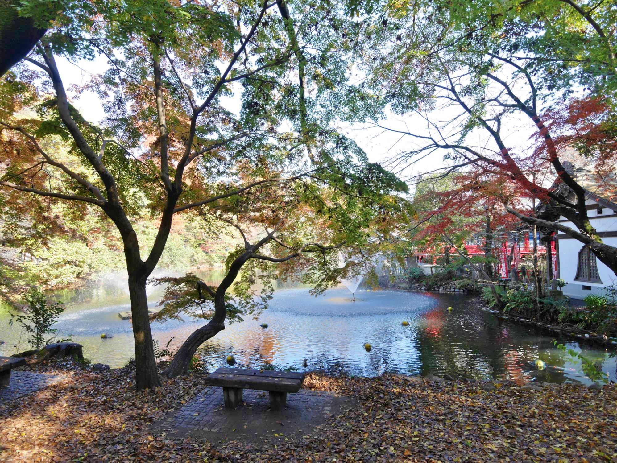 20161125-井の頭恩賜公園 (6)池.jpg