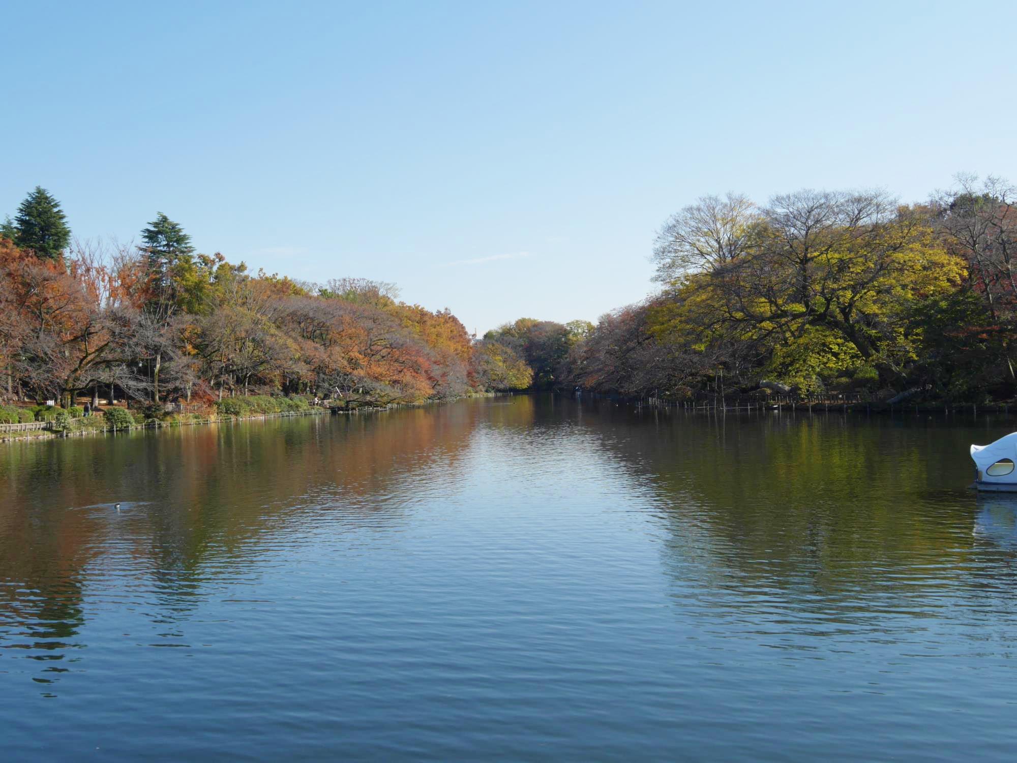 20161125-井の頭恩賜公園 (24)池.jpg