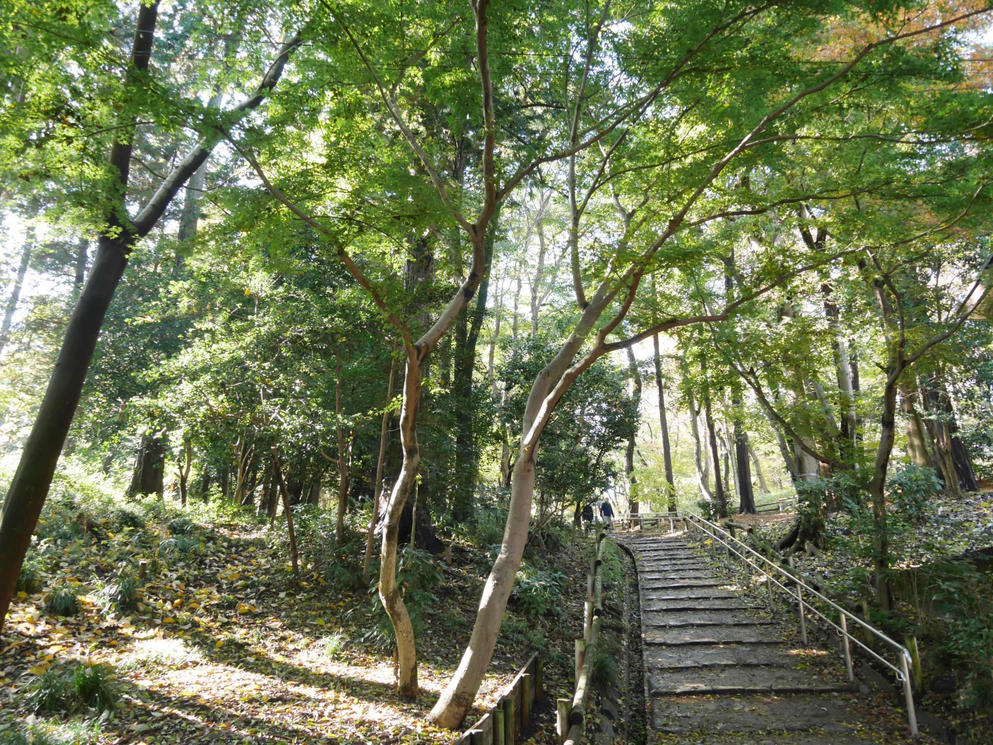 20161125-井の頭恩賜公園 (7)遊歩道階段.jpg